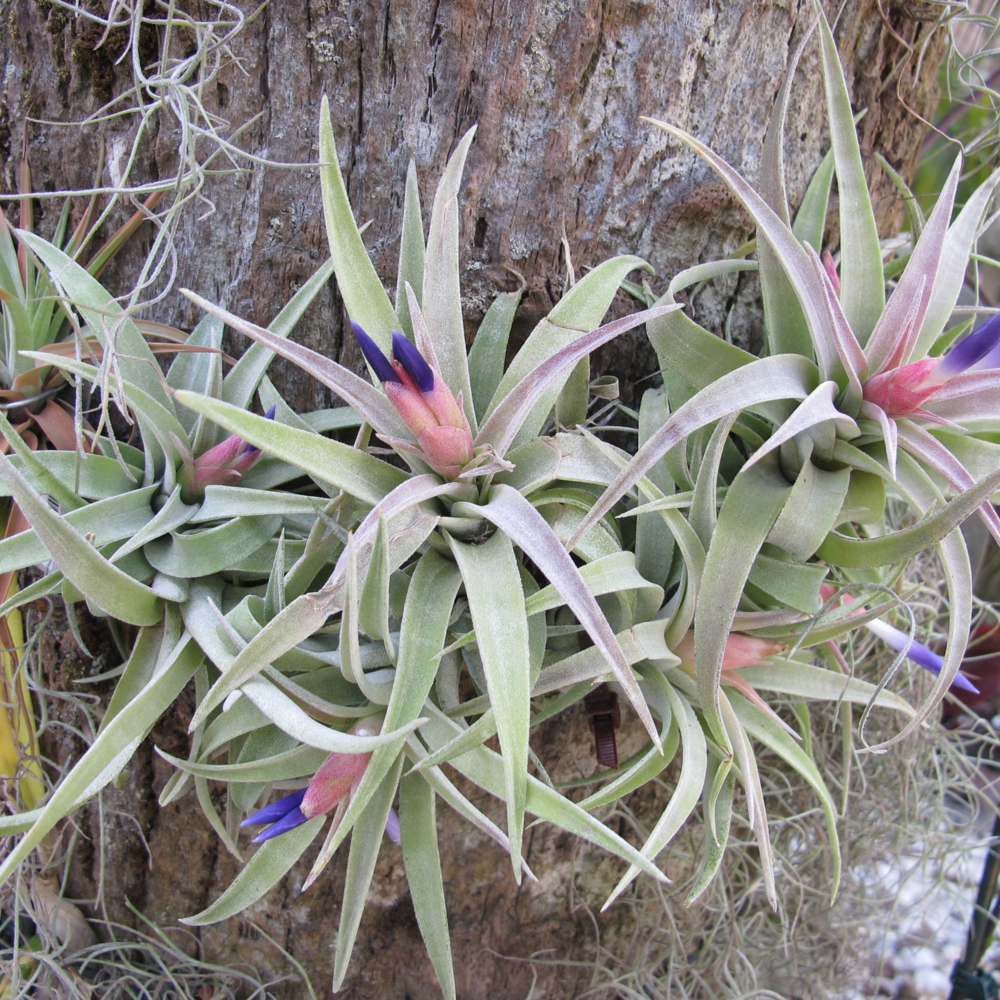 Air plants add texture and a bit of whimsy to any environment...