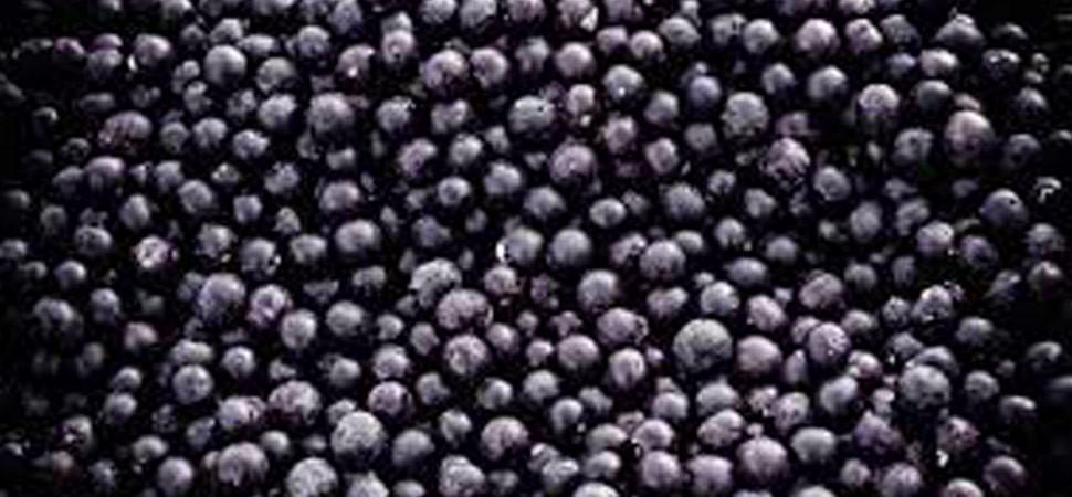 Acai berries.jpg
