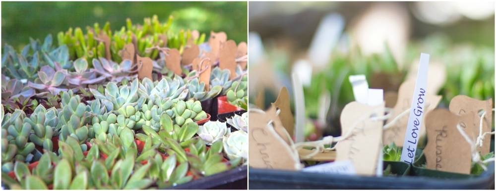 Each guest left with a succulent plant as their wedding favor.