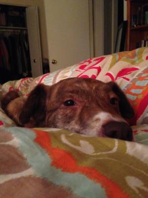 Our dog Barkley.