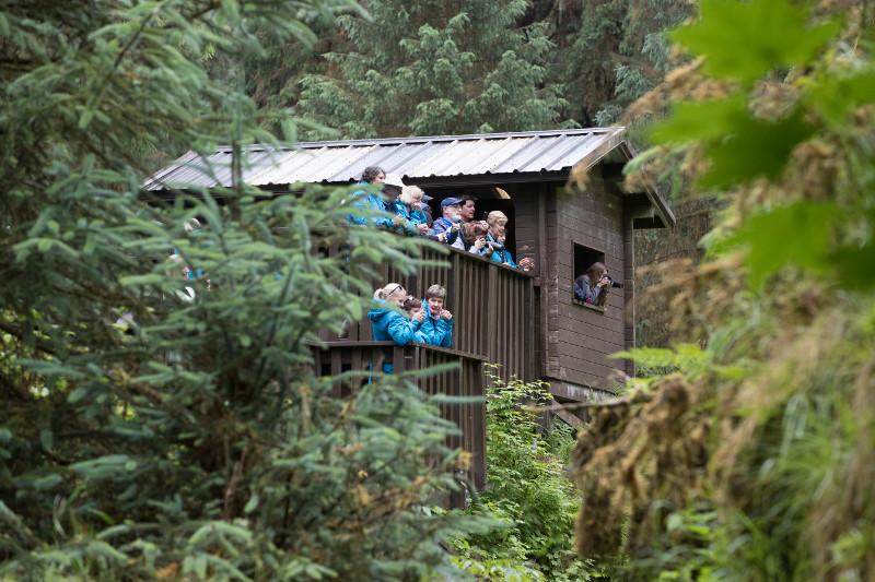 SBN_ABC_RSAY17_Guests at Anan Creek Bear Viewing Platform_Wrangell_Alaska.jpg