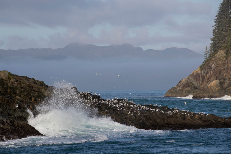 SBN_ABC_RSAY17_Inian Islands_Alaska_4.jpg
