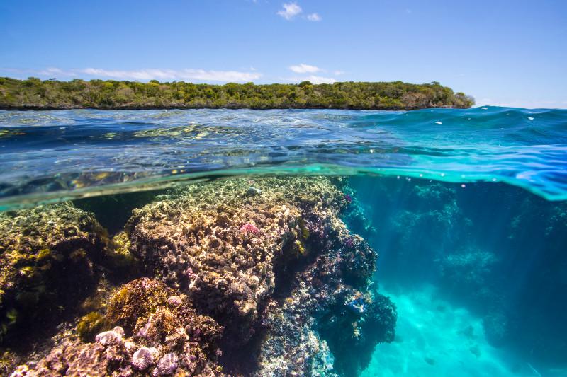 SBN_ASP_RSAY18_Ventures_Underwater reef landscape_near Isle of Pines_Kuto_New Caledonia_2.jpg