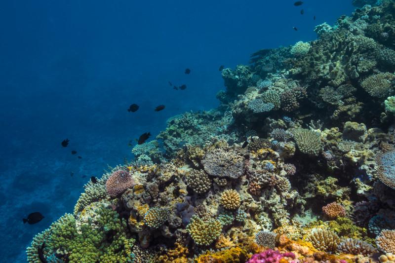 SBN_ASP_RSAY18_Ventures_Underwater reef landscape_Tadine_New Caledonia.jpg