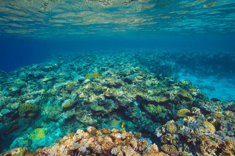 SBN_ASP_RSAY18_Ventures_Underwater reef landscape_Tadine_New Caledonia_6.jpg