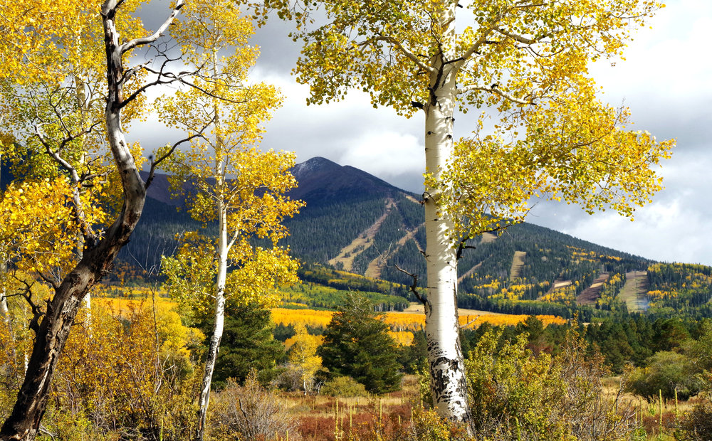 Fall on Hart Prairie, San Francisco Peaks. Arizona