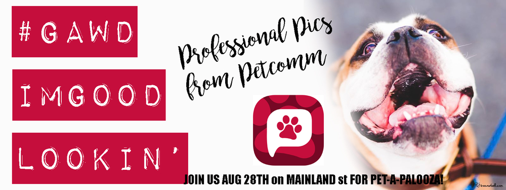 Visit the PetComm Booth to get a professional pic for your dogs profile on PetComm the newest and best app for any pet owner