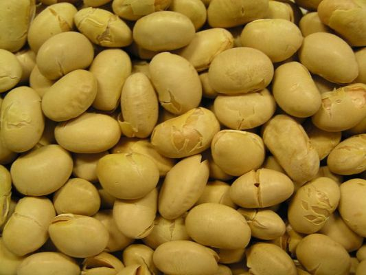 High soy diet reduces risk of prostate cancer