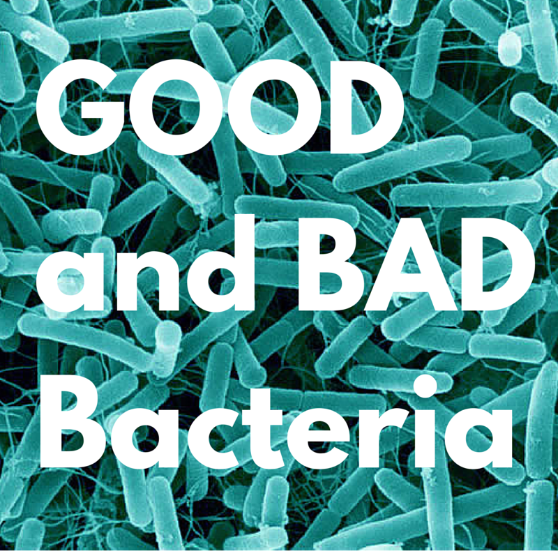 typesofbacteria.jpg