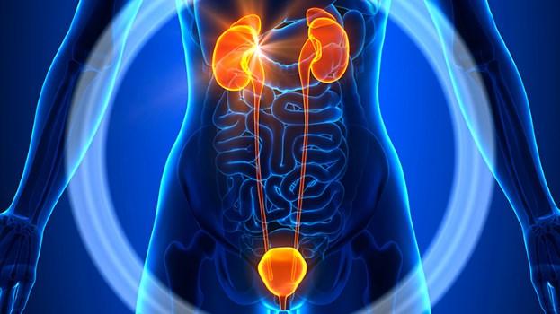 bladderinflammation.jpg