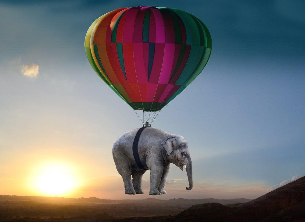 elephant-2605692_1920.jpg