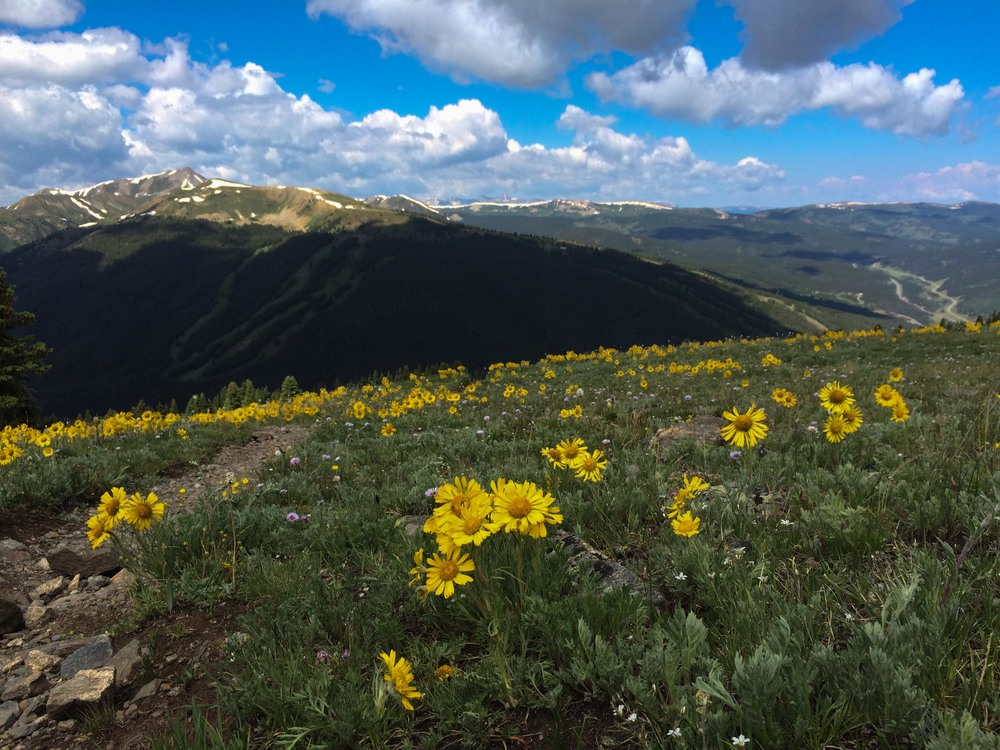 Wildflowers on the Ten Mile Range, just outside Breckenridge. PHOTO BY WILLOW BELDEN