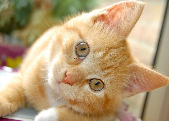 This kitten has nothing to do with anything, but it's pretty cute. (Photo courtesy of the Internet)