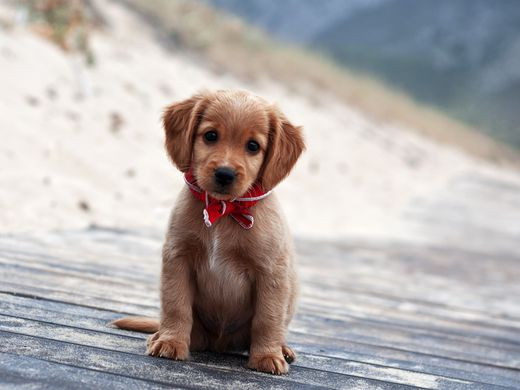 This photo also has nothing to do with anything. But…puppies. (Photo courtesy of the Internet)
