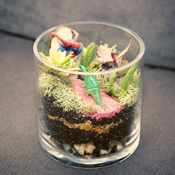 Spider Man: Check out small terrariums