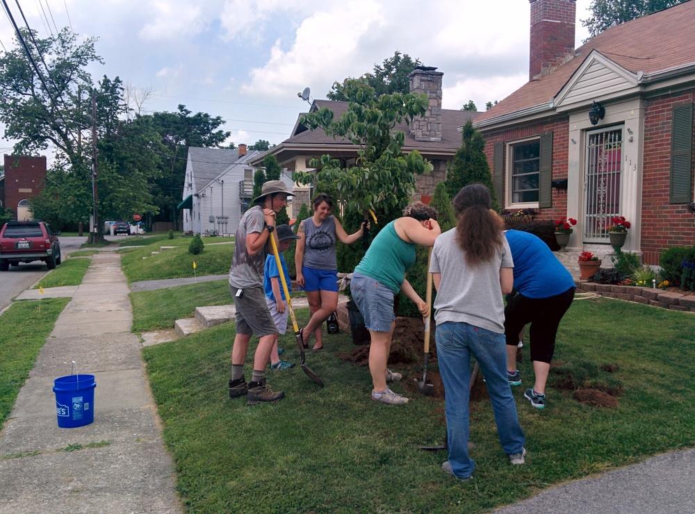Neighbors plant a tree on Avon Ave.