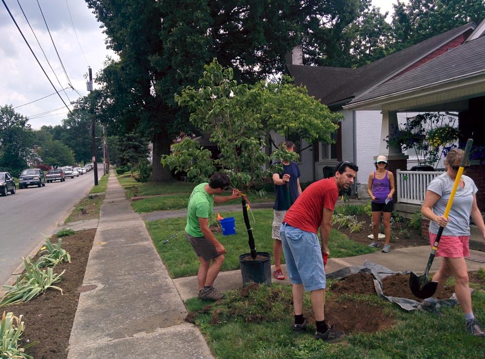 Neighbors plant a tree on Burnett Ave.