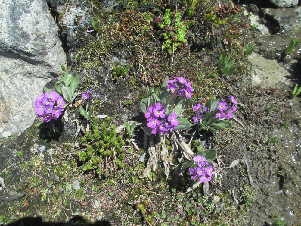 Blooms from glacial mud
