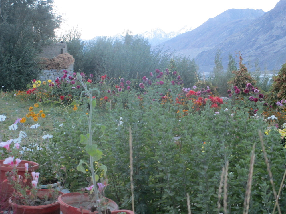 Pnimex in the Nubra valley