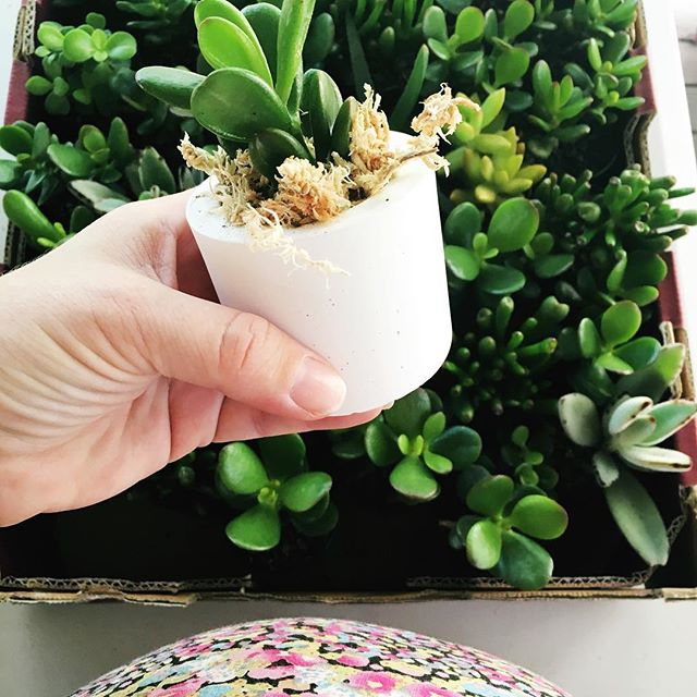 And.... Behind the scenes with the bump, potting up some crisp and fresh wedding favours for a lovely bride, so relaxing to be working on the deck today!  Wedding orders are on hold for a couple months but Ill be back in the swing of things for December and 2017 weddings!  #behindthescenes #vesselandvine #weddingstyle #succulentfavors #brisbaneweddings #eventstyling