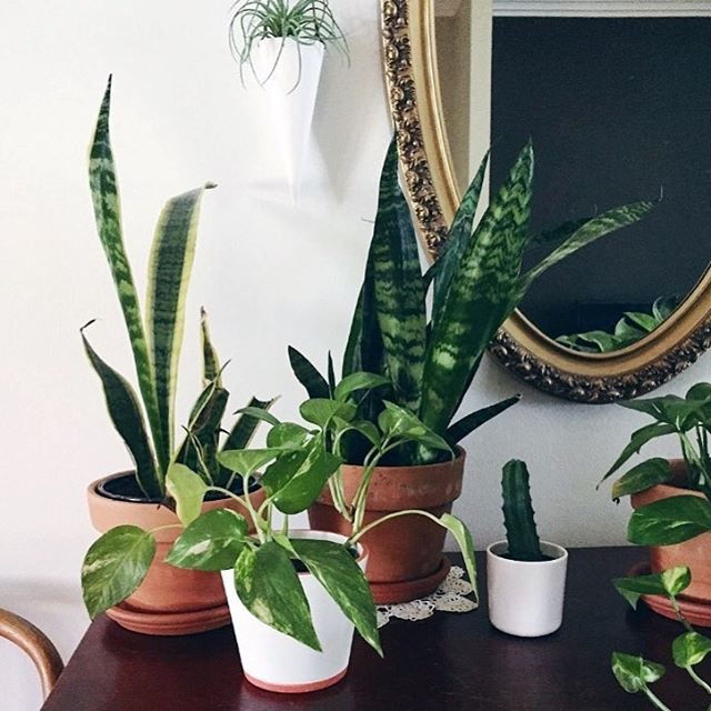 The cutest plant corner all the way over the oceans in the US featuring my white gelato hanging planter! Thanks for sharing @ourgrowingstorey 🌿👏🏼 #handmade #plants #houseplants #nature #greenery #potplants #home #homedecor #homewares #vesselandvine #hangingplanter