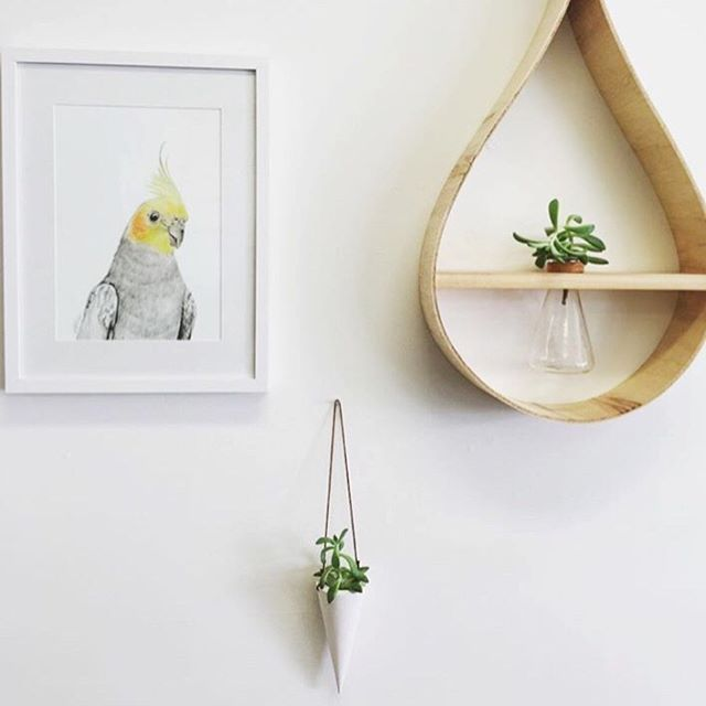 White gelato planter looking cute at @b.grounded #shoplocal #northernnsw #handmade #concretehomewares #homedecor #planter #wallplanter #concretedecor #hangingplanter