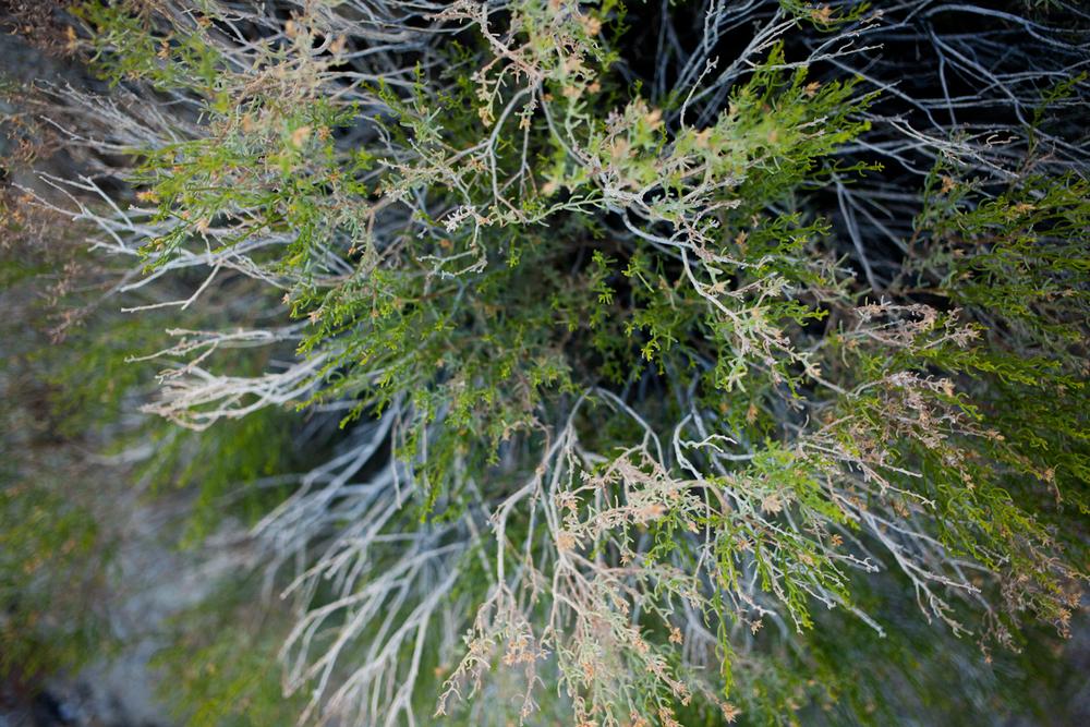 josh_tree-14.jpg