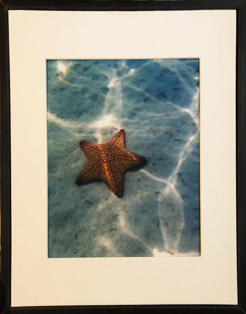 """Underwater Starfish"" by Jett Saustrup"