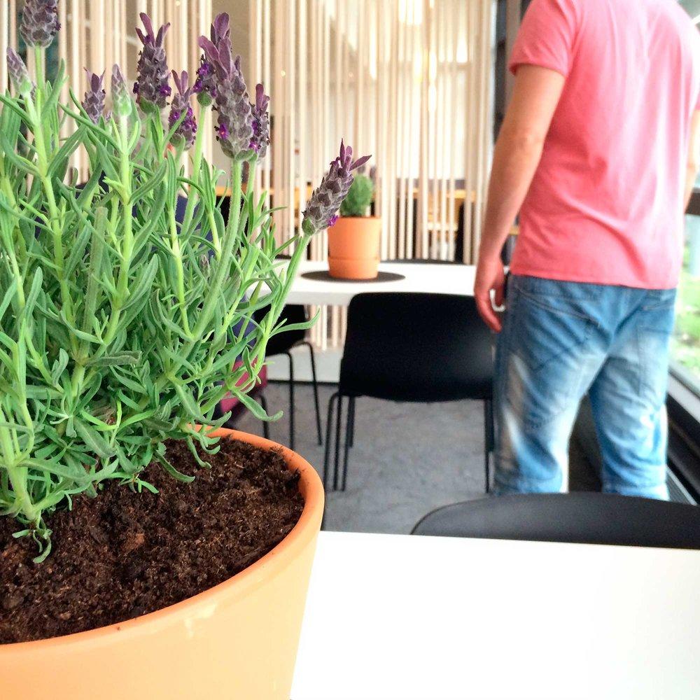 Statoil Cafe Pods -