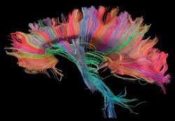 Behandlungsmöglichkeiten Gehirn