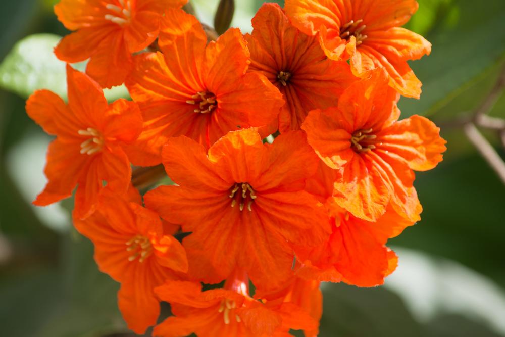 Flora-0043.jpg