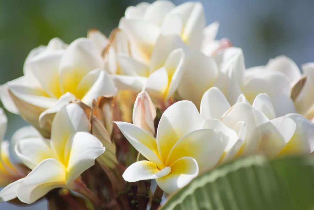 Flora-0063.jpg