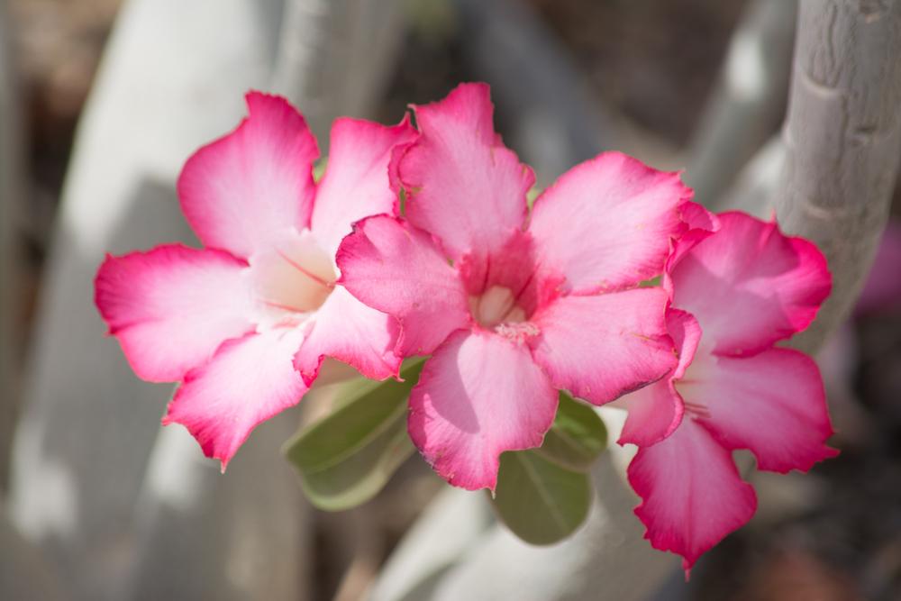 Flora-0081.jpg