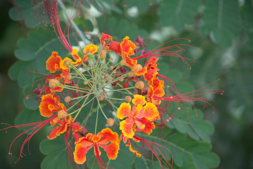 Flora-0093.jpg