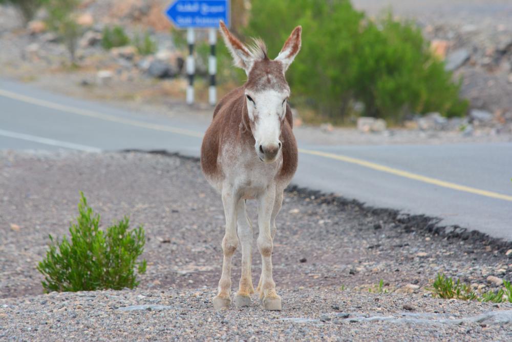 My first donkey sighting.