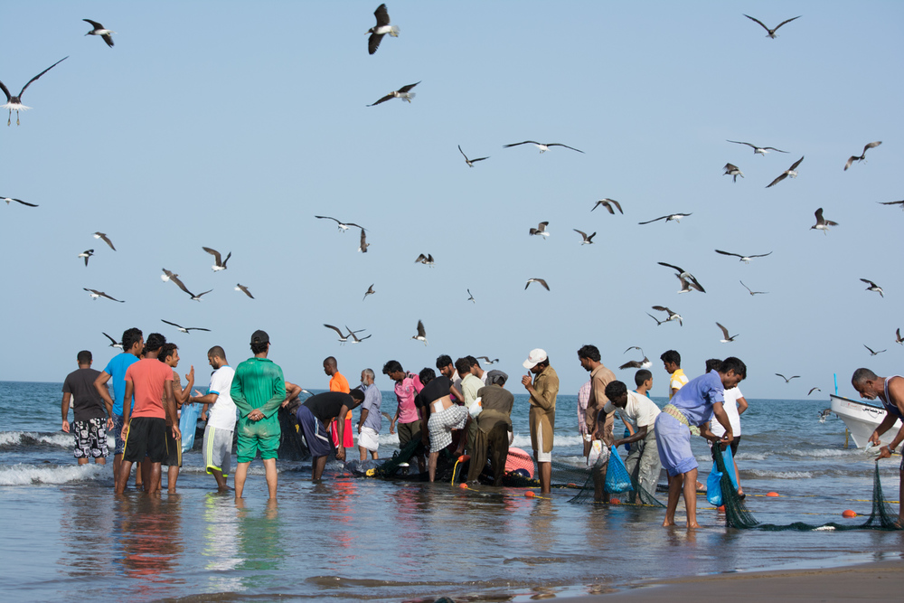 Fishermen and birds moving toward the catch.