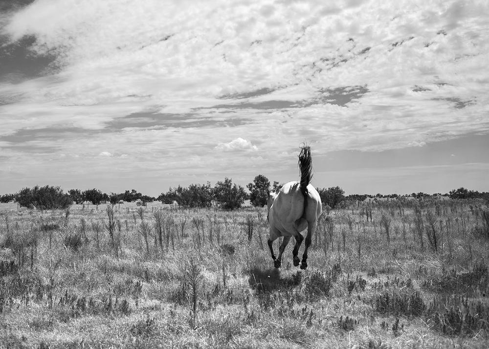 horsebutt.jpg