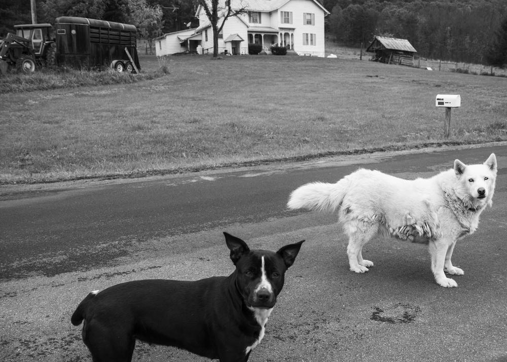 wv_dogs.jpg