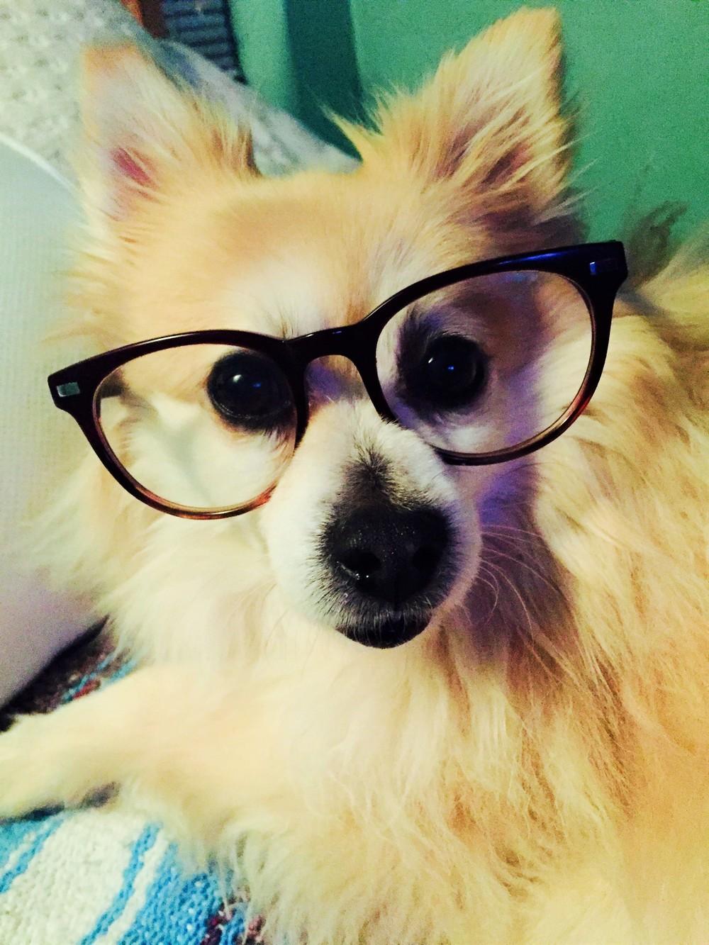 Luka-glasses (2).JPG