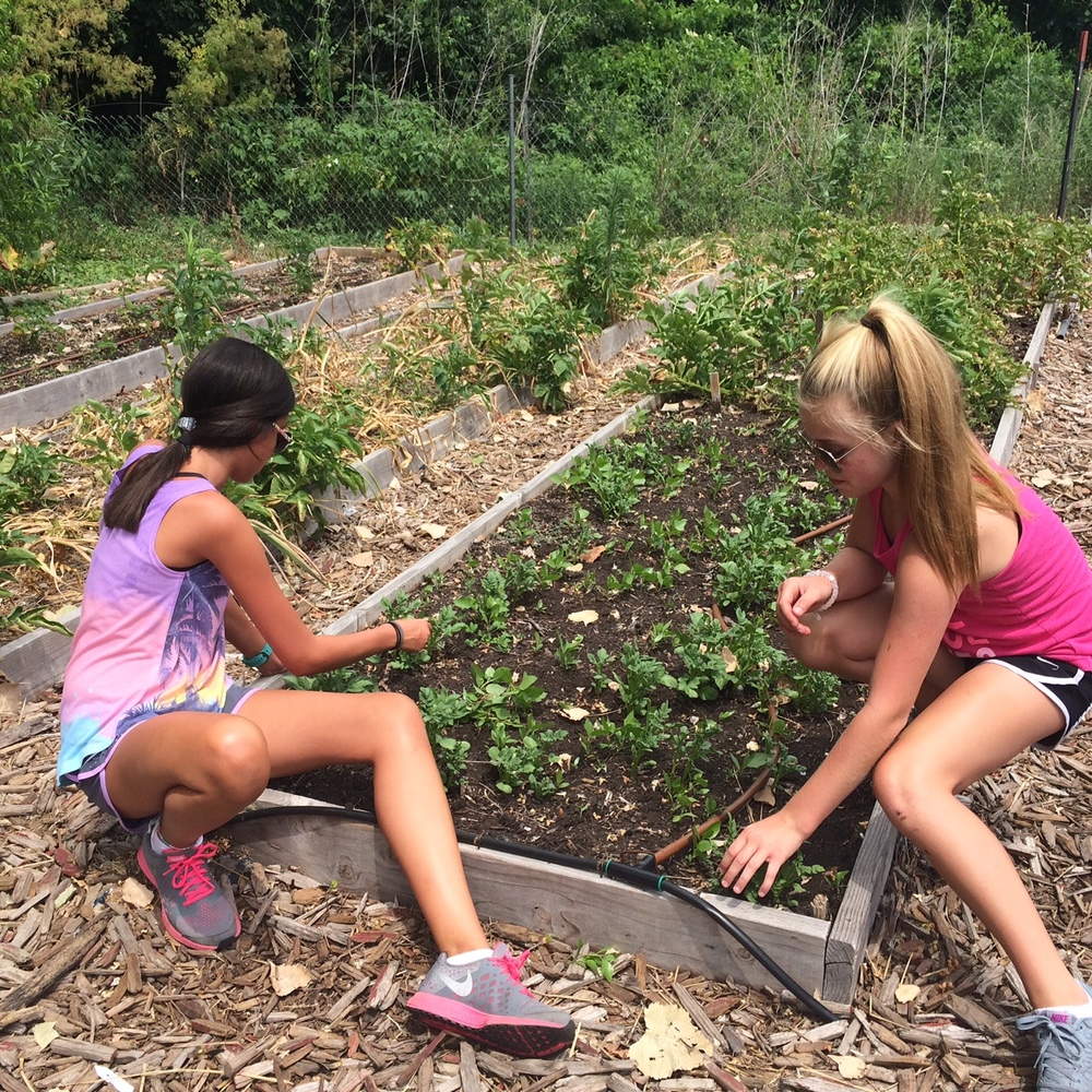 One of the many things youth did at Lawrence Community Shelter & Just Food was to work in the gardens. Photo by Malka Hampton