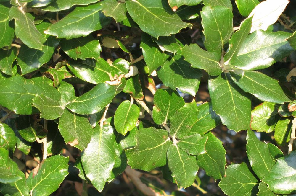 The unusal leaves