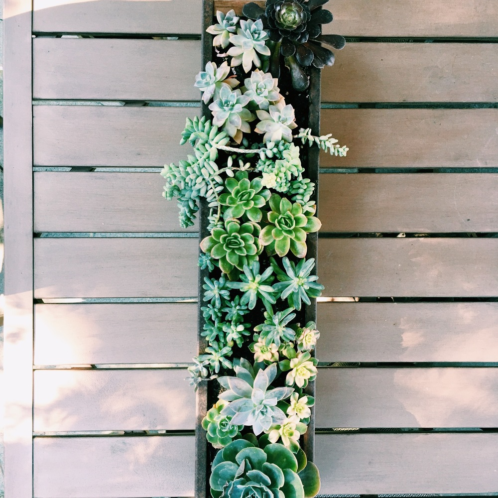 This was a planter that I planted for a good friend of mine who had the container already. Its a salvaged drain gutter!!!