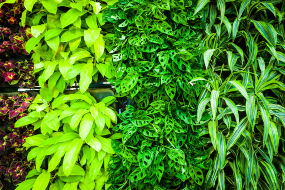 green-bio-wall_onmxmr.jpg