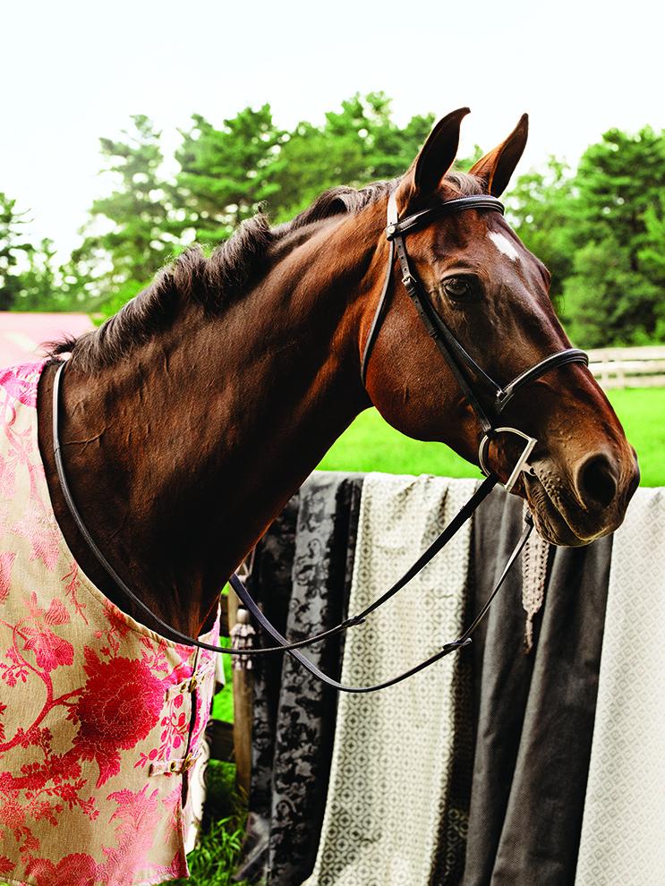 fea_equestrian3.jpg