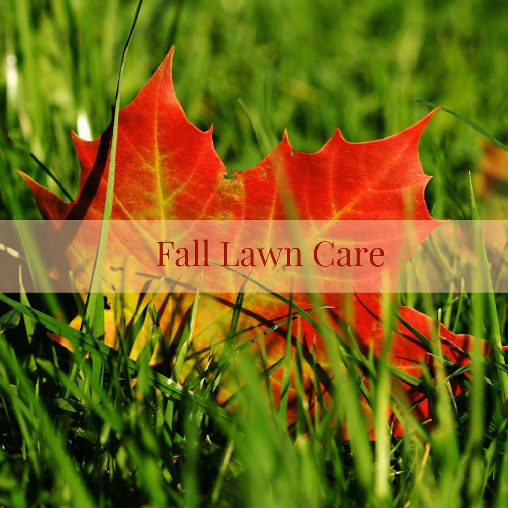 fall lawn care.jpg