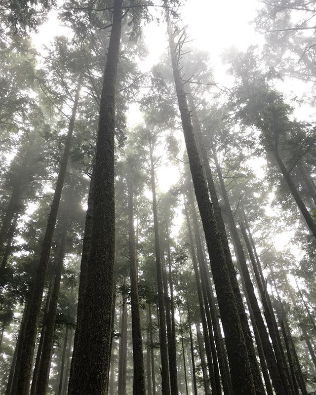 Foggy day in the woods.....winter is coming #fog #forest #pnw #outside #adventureforever #getoutstayout #winteriscoming #chillday #explore #findadventure