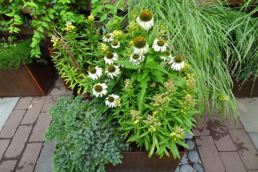 bk_bumpkin_garden_maintenance.JPG