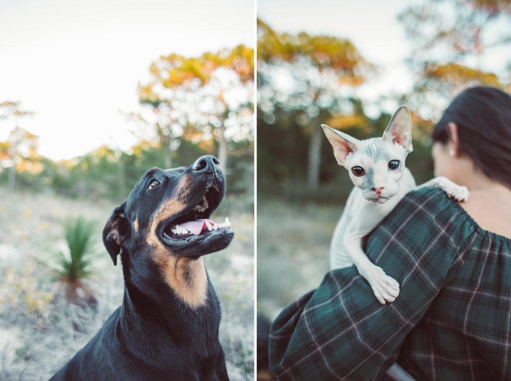 Pets | Navarre, FL