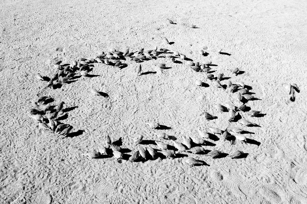 Bird Circle.jpg