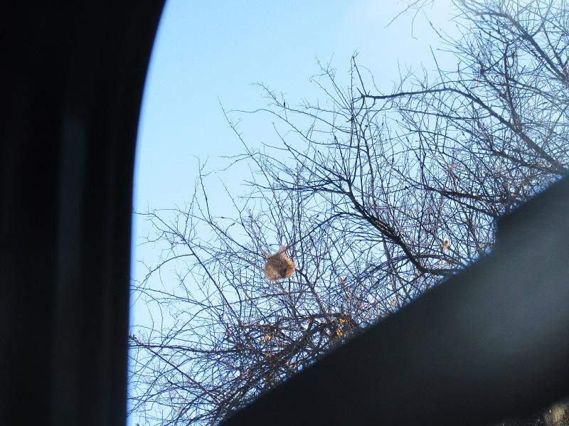 birds nest hanging